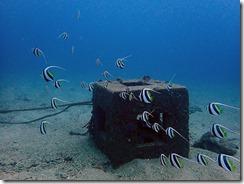 okinawa diving871