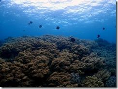 okinawa diving879