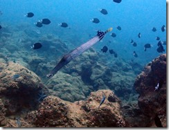 okinawa diving880