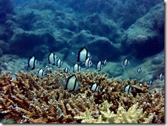okinawa diving881