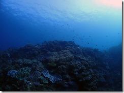 okinawa diving883