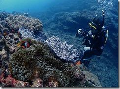 okinawa diving884