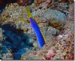 okinawa diving885
