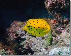 okinawa diving888