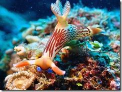 okinawa diving897