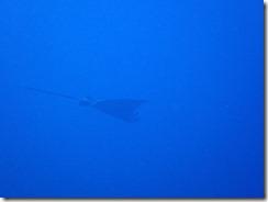 okinawa diving898