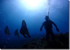 okinawa diving899