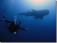 okinawa diving910