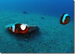 okinawa diving913