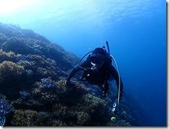 okinawa diving916