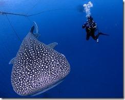 okinawa diving920