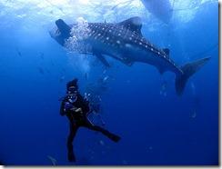 okinawa diving921
