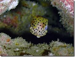 okinawa diving928