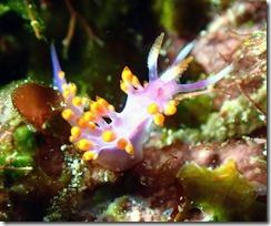 okinawa diving929