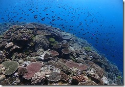 okinawa diving931