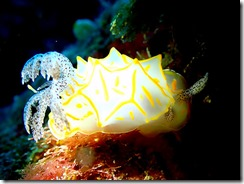 okinawa diving933