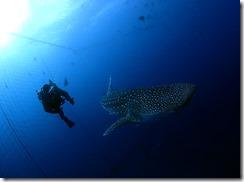 okinawa diving936