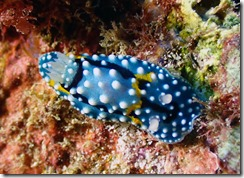 okinawa diving939