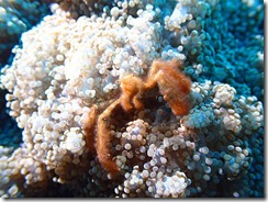 okinawa diving944