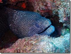 okinawa diving957
