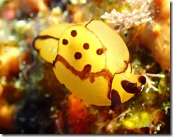 okinawa diving962