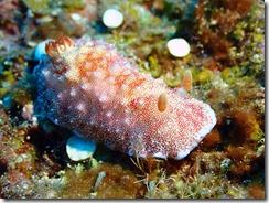 okinawa diving975