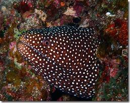 okinawa diving981