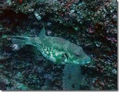 okinawa diving982