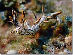 okinawa diving983