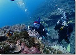 okinawa diving985