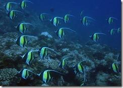 okinawa diving988