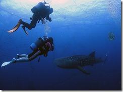 okinawa jinbeizame diving101