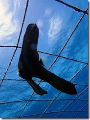 okinawa jinbeizame diving58