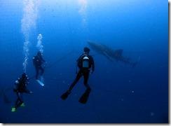okinawa jinbeizame diving92