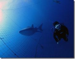 okinawa jinbeizame diving94