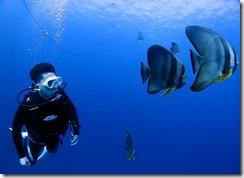 okinawa jinbeizame diving96