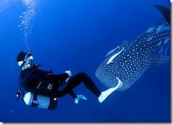 okinawa jinbeizame diving97