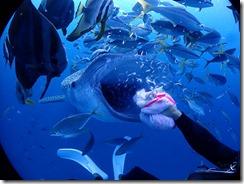 okinawa jinbeizame diving98