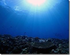 okinawa kerama diving1002