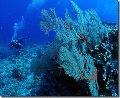 okinawa kerama diving1003