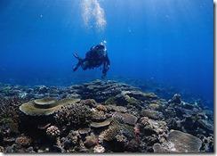 okinawa kerama diving1004