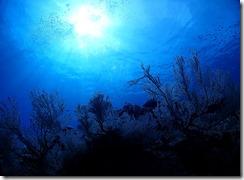 okinawa kerama diving1006