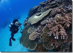 okinawa kerama diving1007