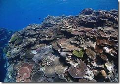 okinawa kerama diving1013