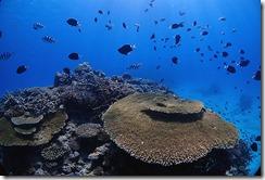 okinawa kerama diving1015