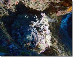 okinawa kerama diving1017