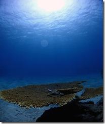 okinawa kerama diving1018