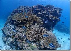 okinawa kerama diving1019