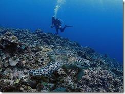 okinawa kerama diving1021