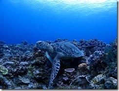 okinawa kerama diving1022
